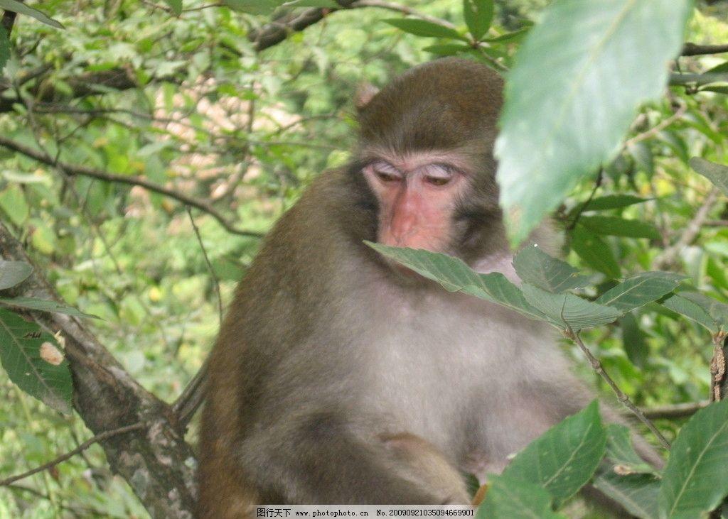 猴子 一只猴子 动物 森林 树叶 生物世界 野生动物 摄影