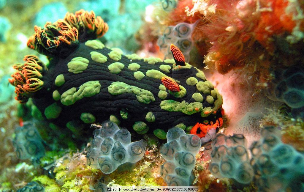 海底生物图片_海洋生物