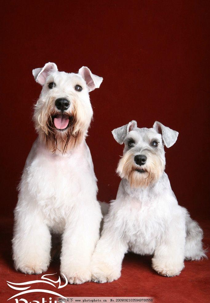 狗狗 结婚照/狗狗结婚照图片