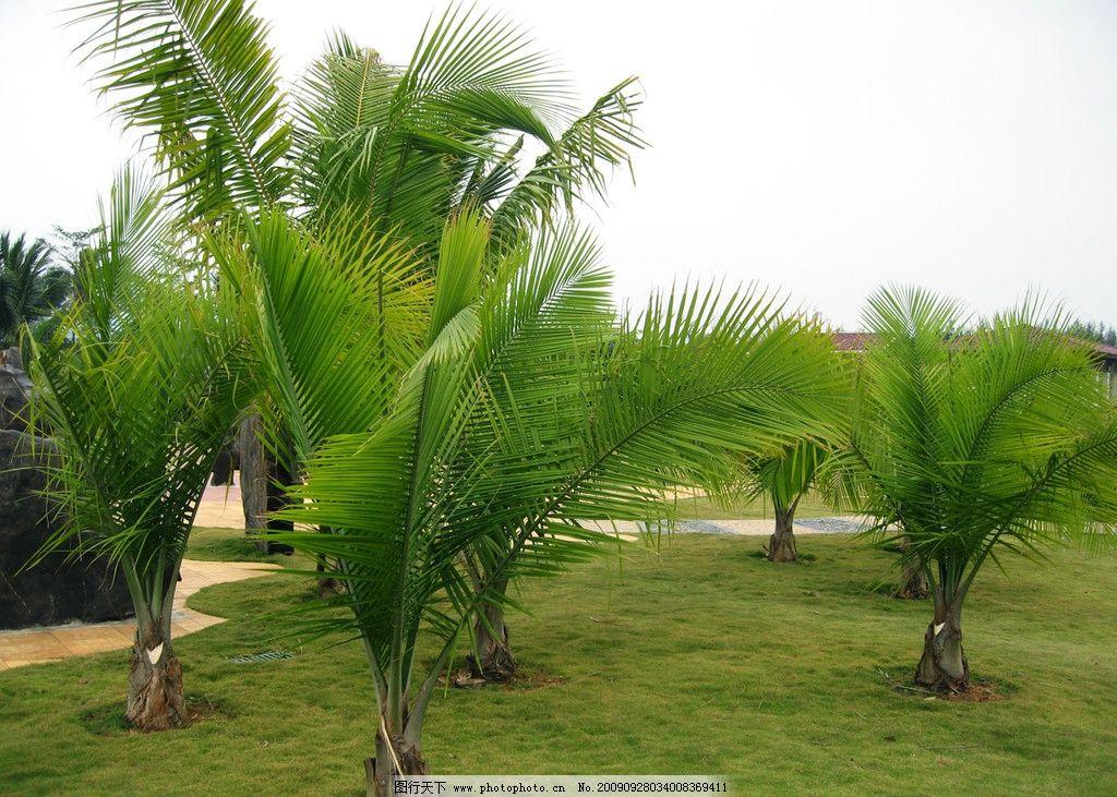椰树风景图片