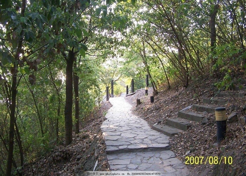 林荫小道 大树 小路 自然风景 自然景观 摄影 230dpi jpg