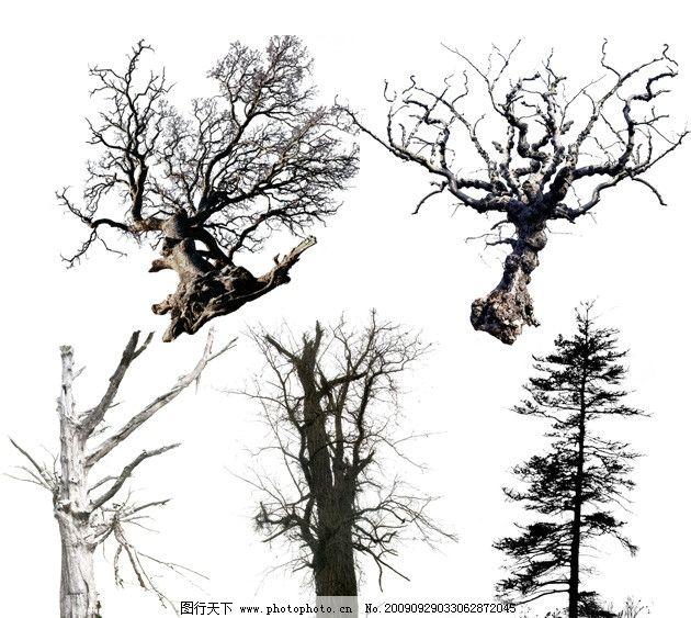 枯树1 颓废 枯萎 树枝 树头 树木 大树 树干 源文件