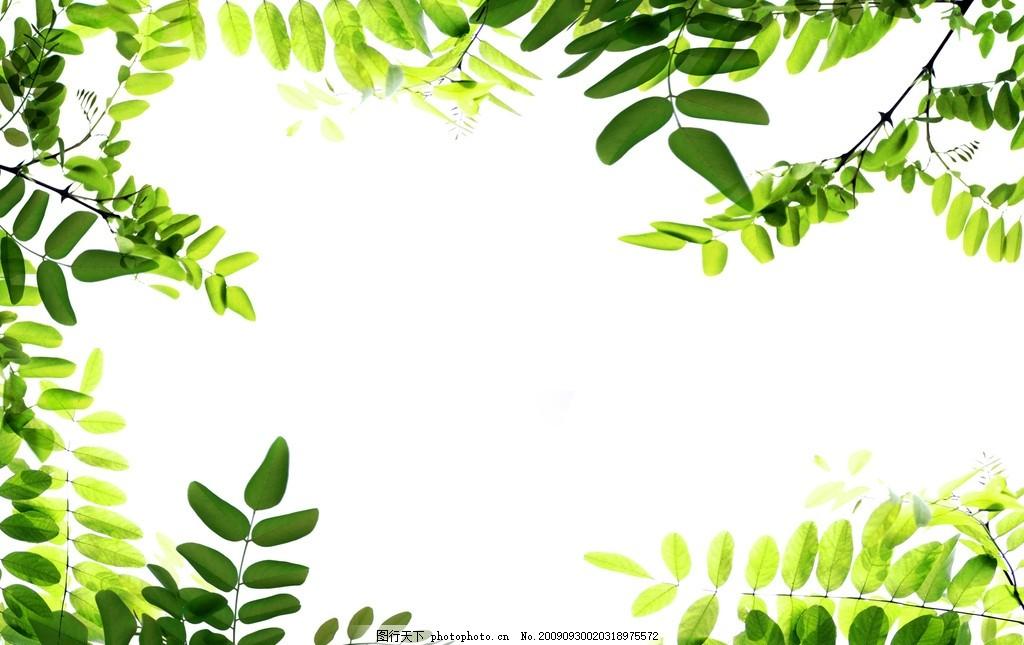 植物边框高清,植物边框高清图片 树叶 花边 花纹-图行