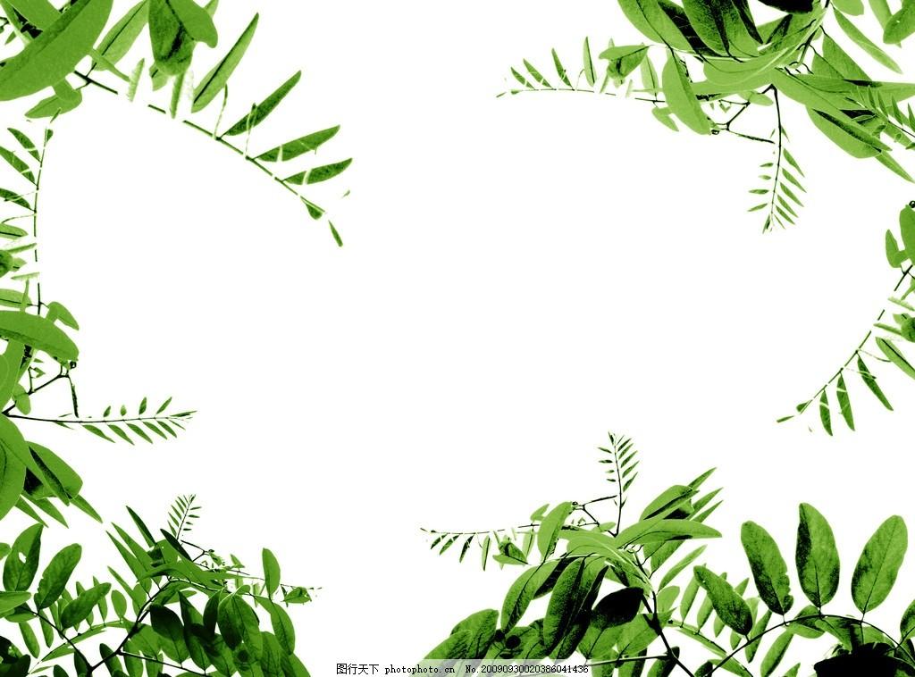 植物边框高清 植物边框高清图片 树叶 花边 花纹