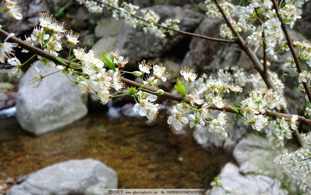 一枝花 春天 山花烂漫 溪水 山石 白色 欣喜 风景 自然风景 自然景观