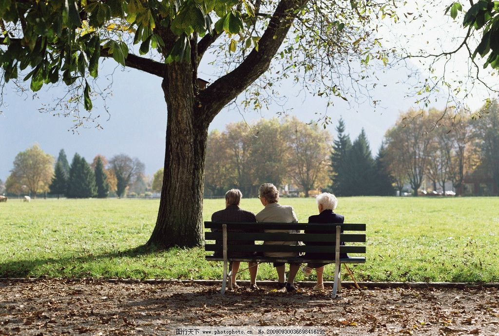 长椅上的老人背影 公园大树下 三个老人 老年人物 人物图库 摄影 300