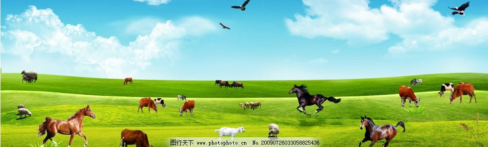 草原牧歌 自然风景 美景 蓝天 白云 辽阔草原 牲畜 马 牛 羊